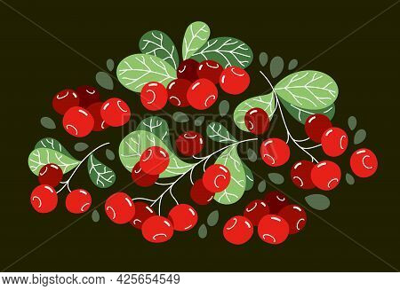 Fresh Delicious Ripe Wild Lingonberry Vector Flat Illustration On Dark Background, Natural Diet Food