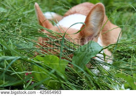 The Dog Lies In The Grass. The Dog Hid In The Tall Grass