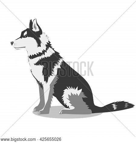 A Big Dog Of The Husky Breed, Isolated On A White Background. Favorite Pets. Vector Flat Illustratio