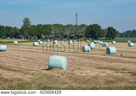Freshly Mown Grassland With Hay Bales In Plastic, Farm With Cows In The Background. Dutch Picture Wi