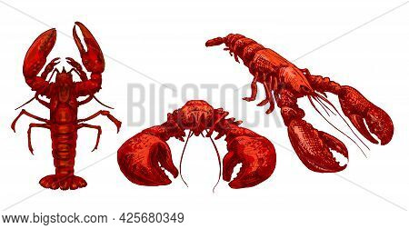 Lobster In Different Pose. Vintage Hatching Vector Color Illustration. Isolated On White Background.