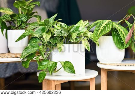 Various Houseplants Like Pothos Or Prayer Plant In Flower Pots On Side Tables