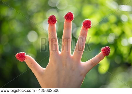 Closeup Of A Female Hand With Raspberries On Fingers Against The Green Summer Garden Bokeh. Harvest