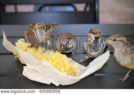 Four Brown Sparrows Pecking Boiled Corn In Paper Packaging On Wooden Table Outdoor, Close-up