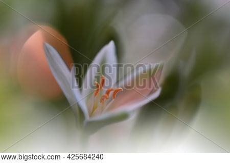 Beautiful macro shot of magic flowers.Border art design. Magic light.Extreme close up macro photography.Conceptual abstract image.White and Green Background.Fantasy Art.Creative Wallpaper.Beautiful Nature Background.Amazing Spring Flowers.Copy Space.