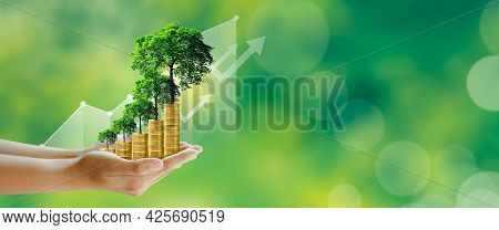 Businessman Hand Holding Step Of Coins Stacks With Tree Growing On Top In Nature Green Background. M