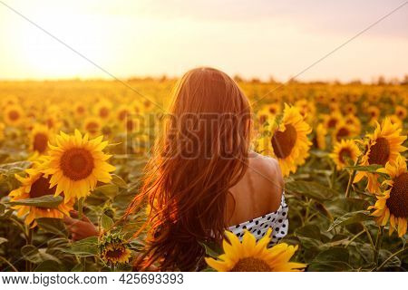 Girl With Long Hair Stands With Her Back In Field Of Blooming Sunflowers In The Rays Of The Setting