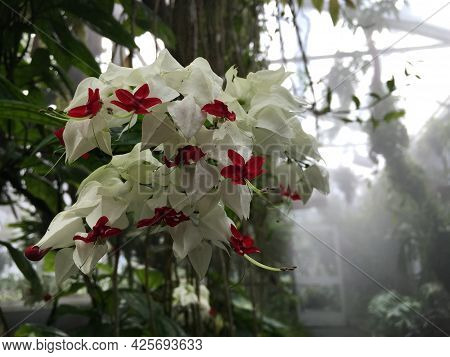 Flowers And Plants In Greenhouses Or In A Tropical House In Botanical Garden Saint Gall (blumen Und