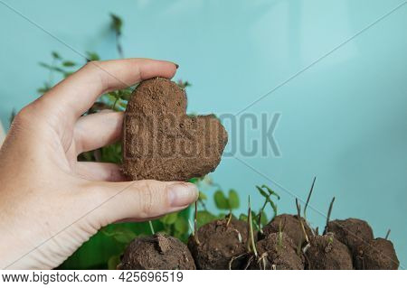 Make Seed Balls. Hearts Of Green. Woman Is Holding Fresh Produced Seed Balls Or Seed Bombs On Blue B