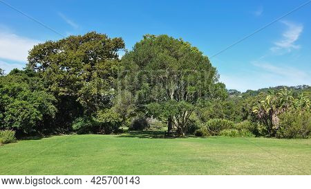 A Clean Green Lawn In The Park Is Surrounded By Tropical Trees. Lush Crowns Against The Blue Sky. Ca