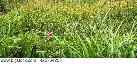 Field With Tall Grass And Wildflowers - Panoramic Background, Template