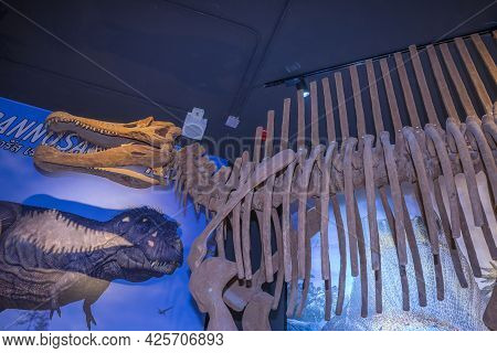 Lampang, Thailand - Feb 24, 2021: Fossil And Statue Of Spinosaurus At Lampang Fossil Geology And Nat
