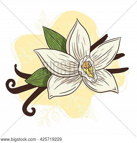 Line Art Vanilla Spice Aroma Illustration. Hand Drawn Vanilla Blossom And Sticks Colorful Illustrati