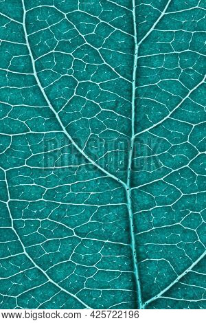 Leaf Of Fruit Tree Close-up. Turquoise Tinted Mosaic Pattern Of A Net Of Veins And Plant Cells. Abst