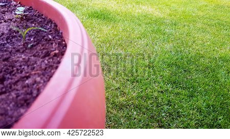 Part Of The Flowerpot In The Garden And Next To The Green Grass. Empty Copy Space Outdoor Gardening