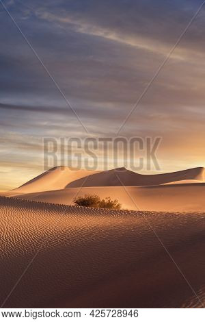 View Of Nice Sands Dunes And Palm At Sands Dunes National Park
