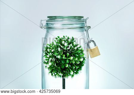 Growing Green Tree In A Glass Jar On Mint Color Bakground. Environment And Ecology Concept.