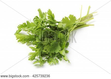 Bunch Of Fresh Cilantro Close Up Isolated On White Background