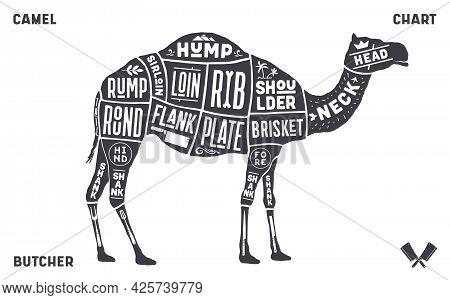 Camel, Dromedary. Scheme, Diagram, Chart Camel, Butcher Guide. Vintage Retro Print, Art Typography,