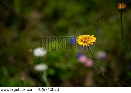 Beautiful Yellow Summer Flower With Green Blurred Background