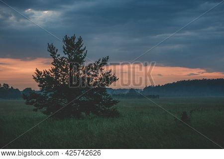 Lonely Tree In A Green Meadow At Red Sunset.