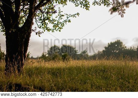 Beautiful Meadow With Reeds, Which Is Illuminated By Golden Sunlight At Sunset.