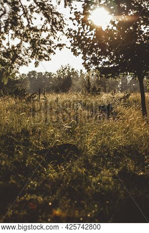 Beautiful Meadow With Reeds, Which Is Illuminated By Golden Sunlight At Sunset Which Shines Through