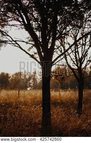 Tree Trunk Silhouette At Sunset In A Golden Meadow.