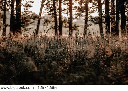 Beautiful Landscape With A Meadow With Dewdrops At Sunrise. Bokeh Background