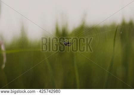 Close-up Of Spider Weaving Web In Forest. Spider Web In Sunny Forest. Spider Web In The Forest On A