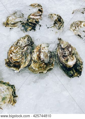 Fresh Oysters On The Counter In The Store.