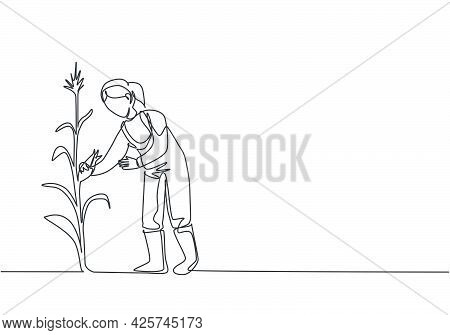 Continuous One Line Drawing Young Female Farmer Picking The Corn On The Tree. Professional Farmer. F