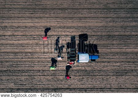 Harvesting Asparagus In The Field - A Group Of People Manually Harvesting Asparagus Near A Tractor -