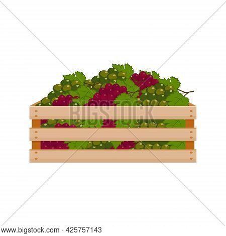 A Bright Summer Illustration Depicting A Wooden Box With Ripe Grapes Of Green And Red Color. The Har
