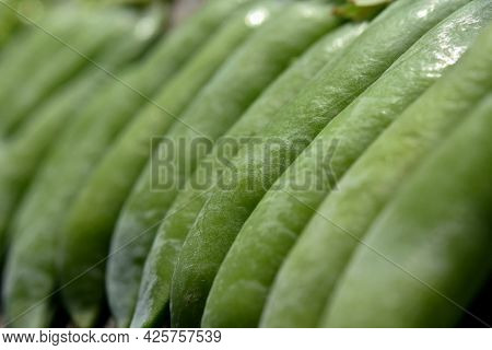 Vegetable Background Of Green Pea Pods With One Open Pea Pod