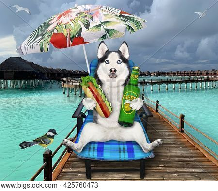 A Dog Husky On A Beach Chair Is Drinking Beer With A Hot Dog Under A Yellow Umbrella On The Wooden P