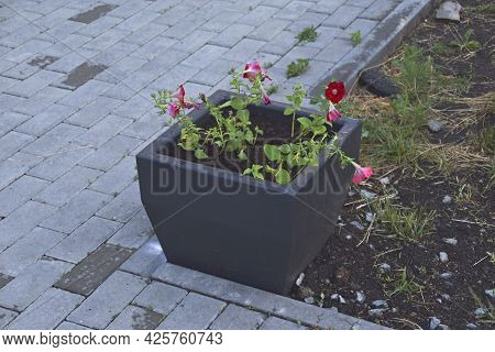 Black Square Flower Bed In The Park In The Evening