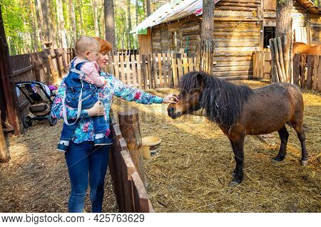 Kemerovo, Russia - 23.05.2021: Farm Animals In A Private Contact Zoo Husky Land In Kemerovo, Russia