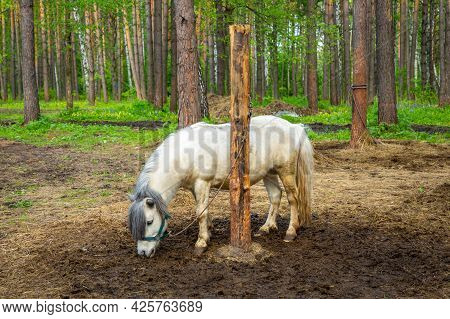 Farm Animals In A Private Contact Zoo Husky Land In Kemerovo, Russia