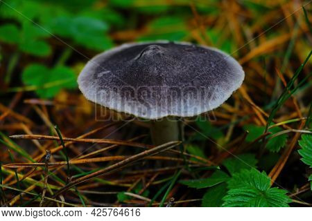 View Of A Growing Inedible Mushroom In The Forest