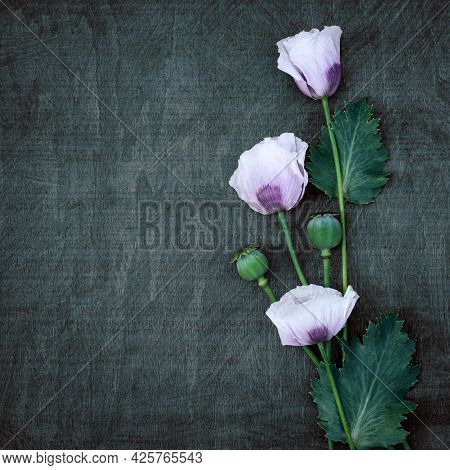 Delicate Light Poppies On A Wooden Green Contrasting Background With Copy Space.