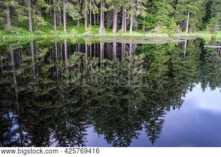 Green Forest By The Lake In Reflection In The Calm Water. Selective Focus
