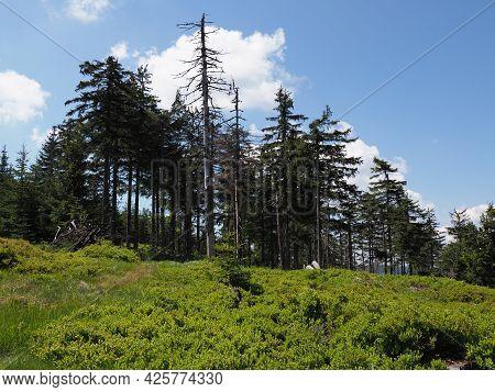 Scenery Of Silesian Beskids Mountains Range Near European Salmopol Pass In Poland, Clear Blue Sky In