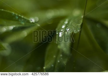 Close-up View Of A Green Leaf With Drops After Rain In The Garden With Copying The Space, Using As A
