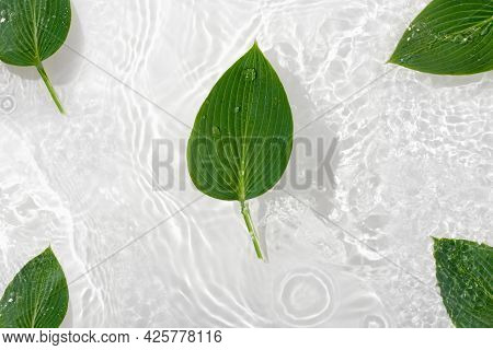 Green Leaves Hosts On Blue Water Background Close-up. White Texture Surface With Rings And Ripple. F