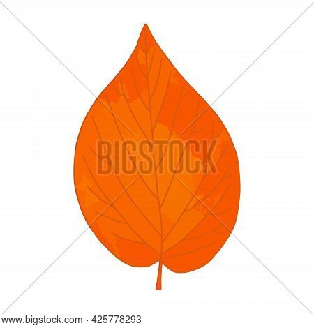 Bright Orange Watercolor Aquarelle Artistic Linden Tree Leaf Vector Illustration Isolated On White B