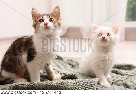 Cute Kittens On Knitted Plaid At Home. Baby Animals