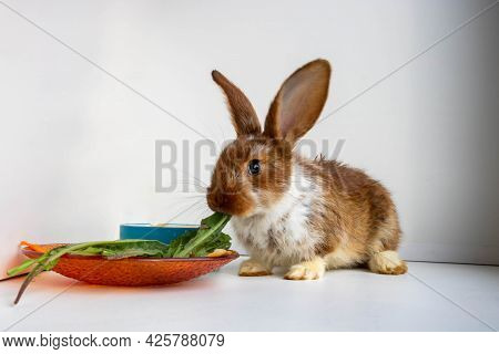 A Small Brown Rabbit With White Spots Is Eating Dandelion Leaves On The Windowsill. Easter Celebrati