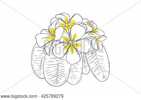 Frangipani Tropical Flower With Leaves. Hand Drawn Plumeria Isolated In White Background. Outline Ve