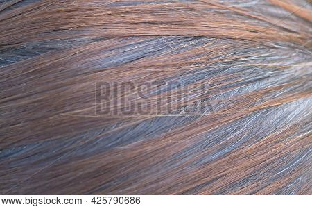 Woman's Hair Texture - Dyed Hair And Gray Hair On The Back. Selective Focus.